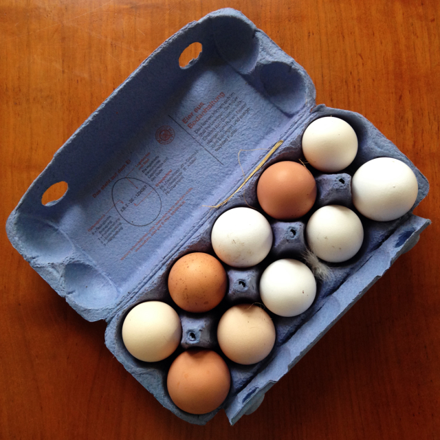 Blue carton of 10 eggs in different shades of brown and white